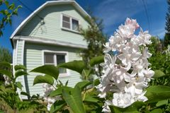 Lilac flowers. On the background of a village house royalty free stock photos