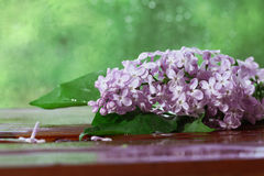 Lilac flowers macro background Stock Images