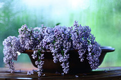 Lilac flowers macro background Royalty Free Stock Images