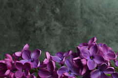 Lilac flowers macro composition frame Royalty Free Stock Image
