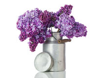 Lilac flowers in old milk churn Stock Photo