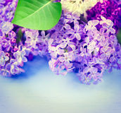 Lilac flowers over blue wooden background royalty free stock images