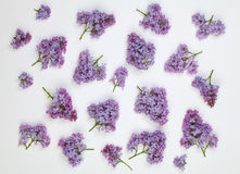 Lilac flowers pattern on white background Stock Images