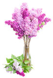 Lilac flowers. Purple Lilac fresh  flowers in vase  isolated on white background Stock Photos