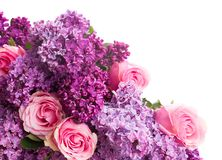 Lilac flowers. Purple Lilac flowers with pink roses close up  isolated on white background Stock Photos