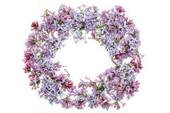 Lilac flowers in round shape Royalty Free Stock Photo