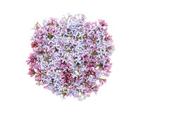 Lilac flowers in round shape Stock Photography