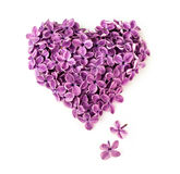 Lilac flowers in shape of heart. Flowers of a lilac in the form of a heart isolated on a white Royalty Free Stock Photo