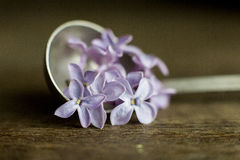 Lilac flowers in the spoon. Closeup royalty free stock photos