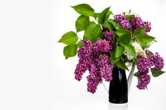 Lilac in vase on white background royalty free stock photos