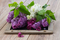 Lilac flowers on table. Twigs of fresh white and purple  lilac flowers on wooden table Royalty Free Stock Photo