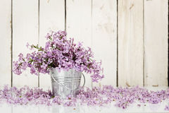 Lilac flowers. In tin bucket against wooden planks royalty free stock photos