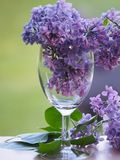 Delicate lilac flowers in a wine glass. royalty free stock images