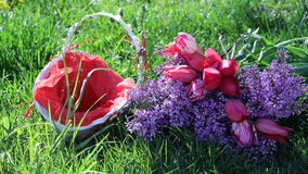 Lilac flowers and tulip basket on a background of green grass stock video footage