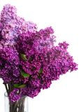 Lilac flowers. Two shades of Lilac fresh  flowers isolated on white background Royalty Free Stock Images