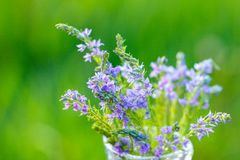 Lilac flowers in a vase close-up on a natural background royalty free stock photography