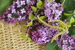 Lilac flowers in vase closeup Stock Photos