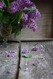 Lilac flowers in the vase Royalty Free Stock Image