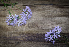 Lilac  flowers on vintage wooden background Royalty Free Stock Images