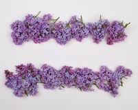 Lilac flowers  on white background Royalty Free Stock Photos