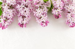 Lilac flowers on white fabric Royalty Free Stock Photo