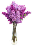 Lilac flowers on white Royalty Free Stock Image