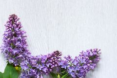 Lilac flowers on white wooden background with copy space stock photo