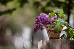 Lilac flowers in a wicker basket, Stock Image