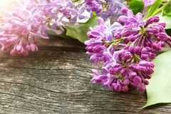 Lilac flowers on wooden background Royalty Free Stock Images