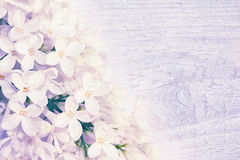 Lilac flowers on wooden texture. Stock Photo