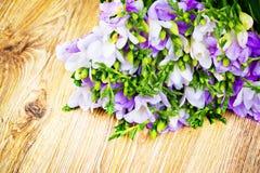 Lilac freesia flowers Stock Photo