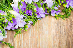 Lilac freesia flowers Stock Image