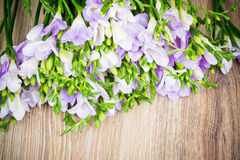 Lilac freesia flowers Royalty Free Stock Images