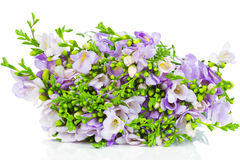 Lilac freesia flowers Stock Images