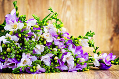 Lilac freesia flowers Stock Photography