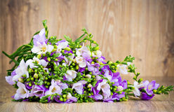 Lilac freesia flowers Royalty Free Stock Photos