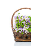 Lilac freesia in the wicker Royalty Free Stock Image