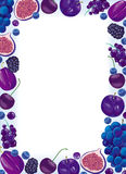Lilac fruit and berries frame. On white background Royalty Free Stock Photo