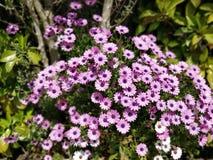 Lilac geplaatste bloemen royalty-vrije stock afbeeldingen
