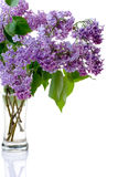 lilac and glass Stock Images