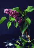 Lilac in a glass vase. Rich beautiful lilac branch in a glass vase on a black background Royalty Free Stock Images