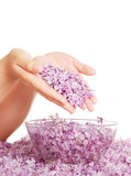 Lilac in hands above a bowl with water Stock Photo