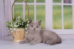 Lilac katjes die dichtbij het venster in een buitenhuis spelen Royalty-vrije Stock Afbeelding