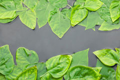 Of lilac leaves in water Stock Photo