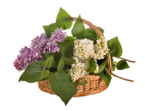 The lilac lies in a basket Royalty Free Stock Photo