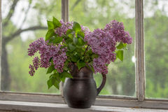 Lilac Royalty Free Stock Photography
