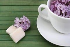 Lilac morning Stock Photos
