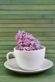 Lilac morning Royalty Free Stock Photography