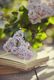 Lilac and old books Stock Photo