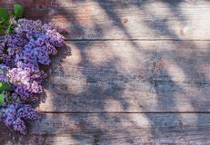 Lilac on old wooden background in sunlight Stock Image